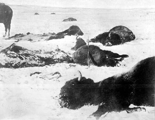 buffalo-extermination1872